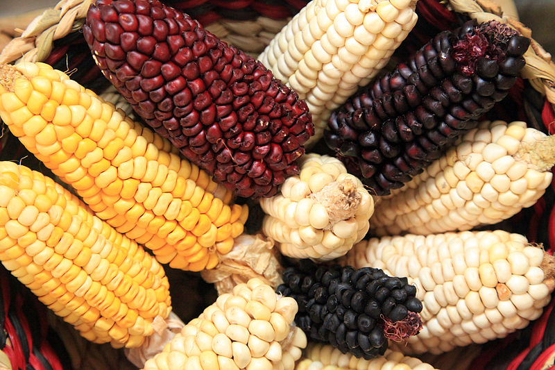 Corn, a resource that gives us life